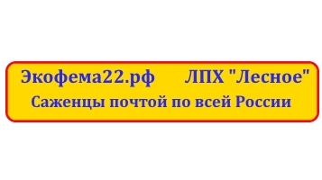 баннер ЛПХ Лесное