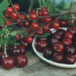 фото крупноплодной войлочной вишни