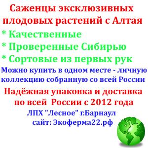 Баннер ЛПХ Лесное Барнаул