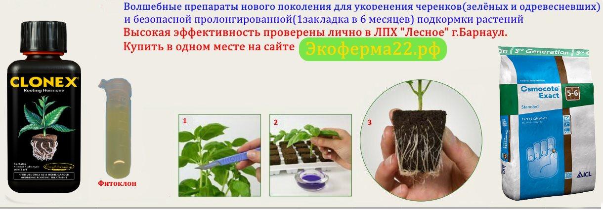 Саженцы плодово-ягодных растений, доставка по всей России.