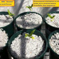 Сопутствующие садовые товары