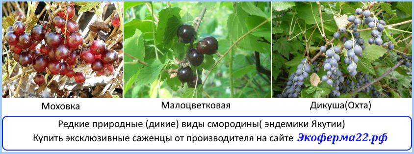 эндемики Якутии